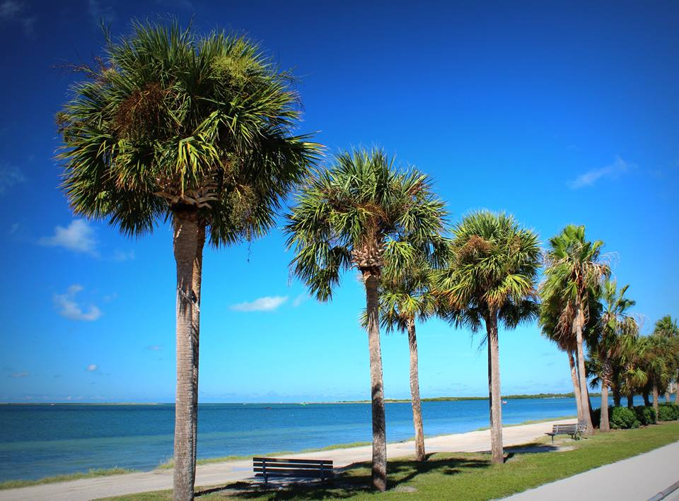 View from the Dunedin Causeway trail.