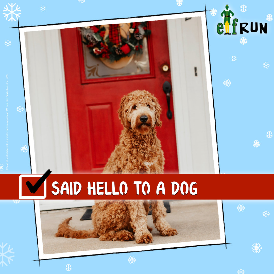 Labradoodle in front of a house at Christmas.