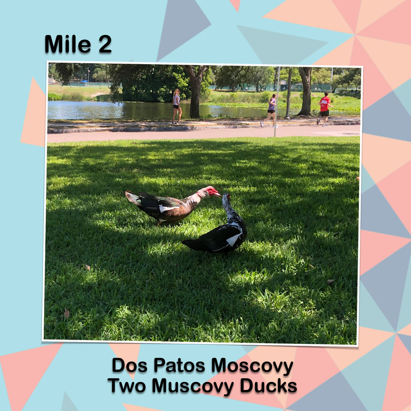 Cinco de Miler graphic for mile two has a photo of two Muscovy Ducks in the grass.