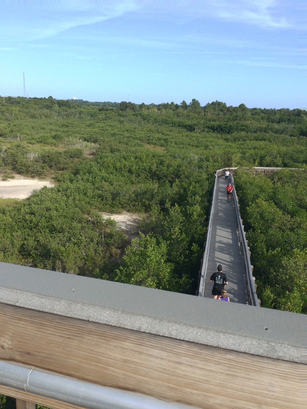 View of Weedon Island Preserve in St Petersburg, FL from the observation tower.