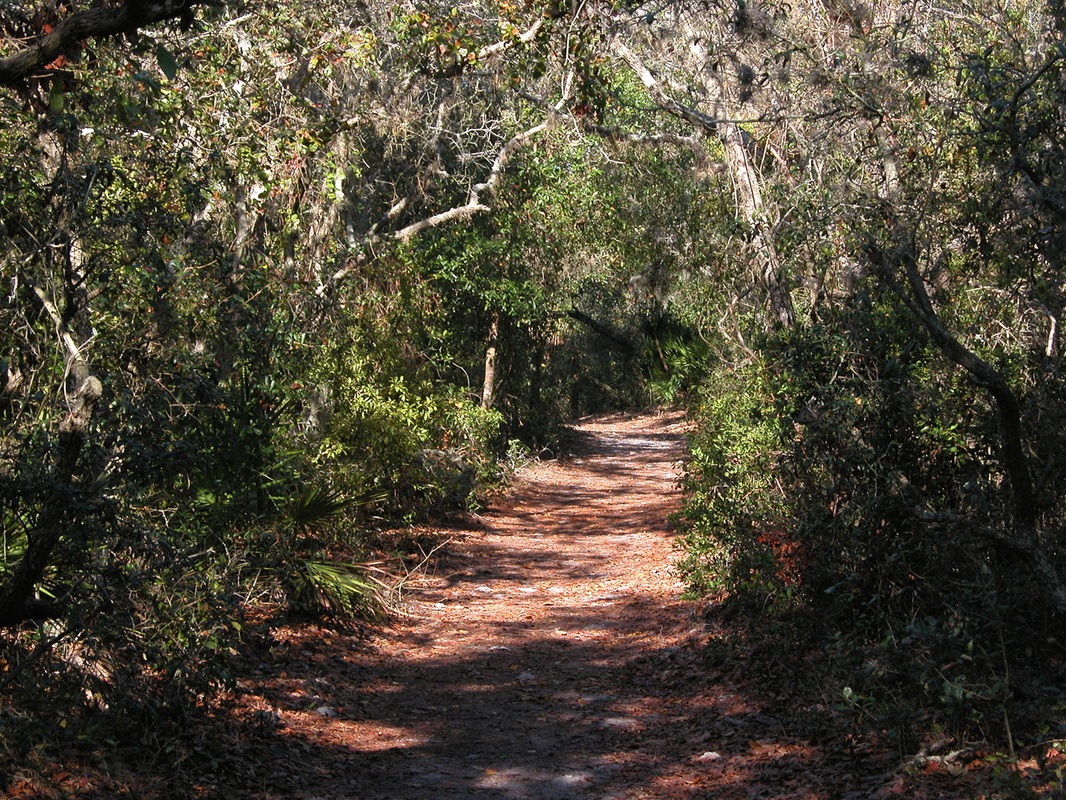 Boy Scout Trail at Weedon Island